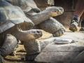 Tortoise1_1000