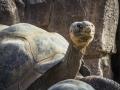 Tortoise2_1000