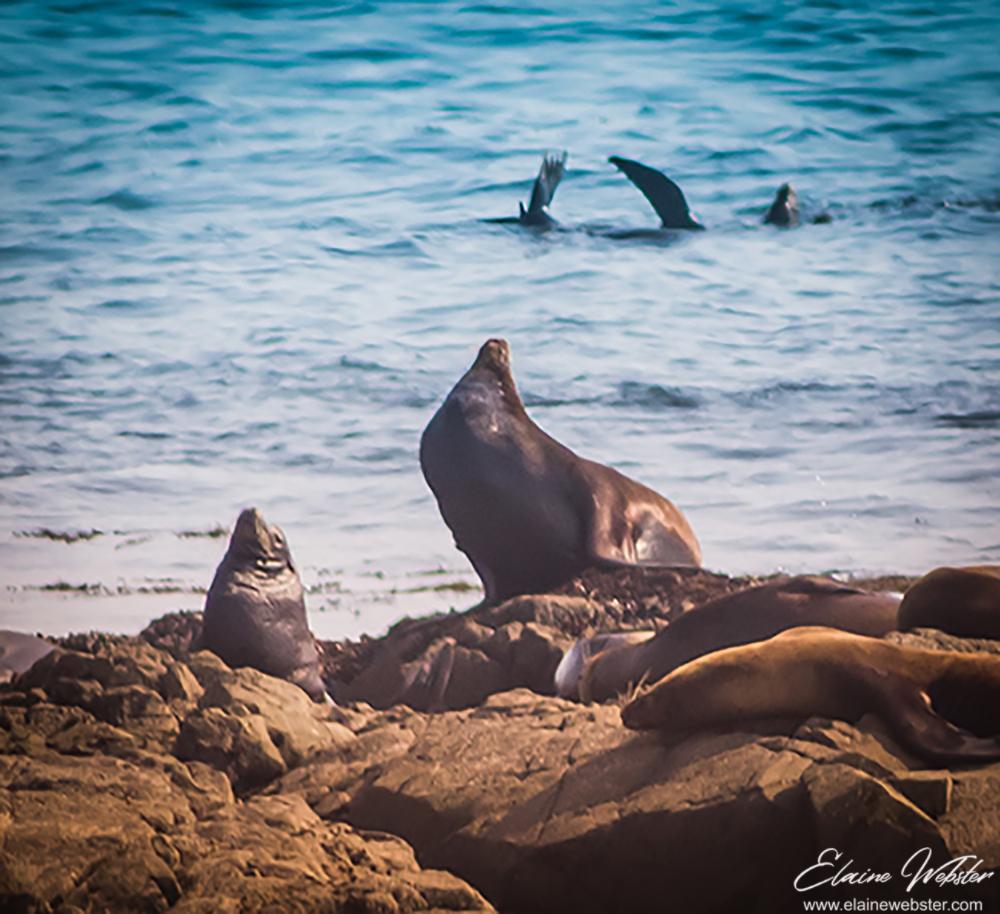 Seals2_1000wm
