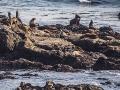 Seals1_1000