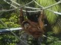 Orangutan+1000